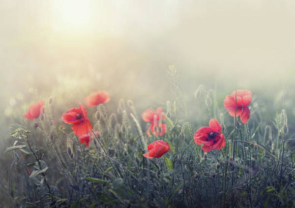 Poppies Photograph - .....*...**...*..**... by Dimitar Lazarov -