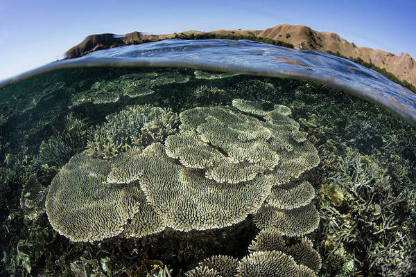 A Beautiful And Fragile Coral Reef Art Print