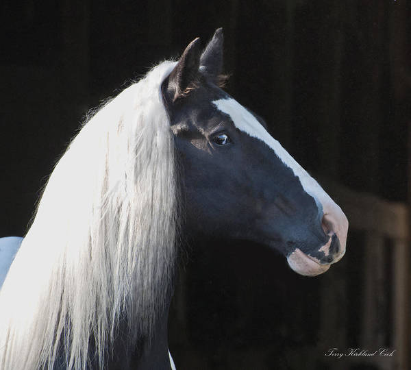 Photograph - A Lovely Horse by Terry Kirkland Cook