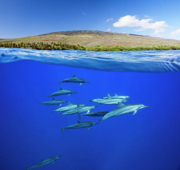 Above And Below Wall Art - Photograph - A Split View Of Spinner Dolphin by Dave Fleetham