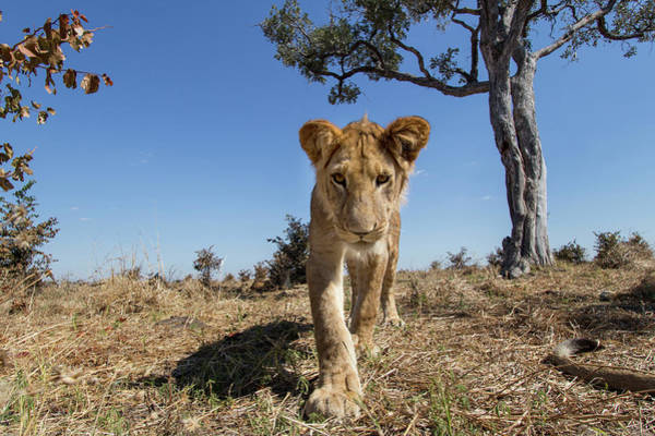 Approach Wall Art - Photograph - Africa, Botswana, Chobe National Park by Paul Souders