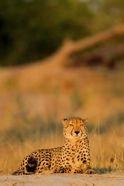 Botswana Photograph - Africa, Botswana, Moremi Game Reserve by Paul Souders