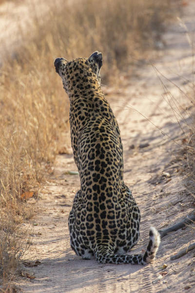 Back Road Photograph - Africa, South Africa, Sabi Sabi Private by Jaynes Gallery