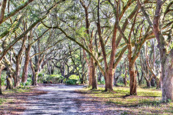 Photograph - Allee Of Live Oaks by Dale Powell