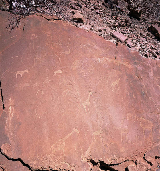 Wall Art - Photograph - Ancient Petroglyphs by Sinclair Stammers/science Photo Library