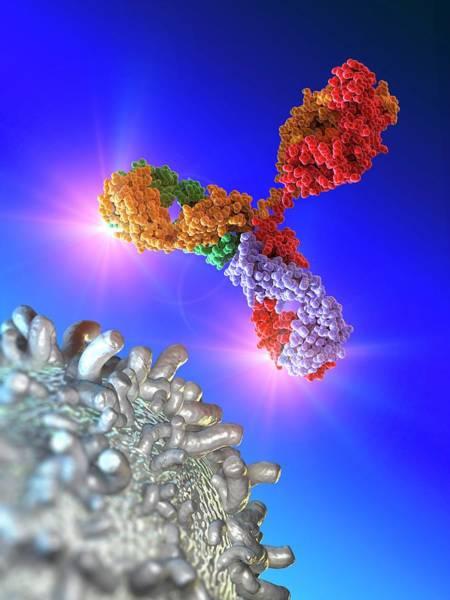 Antibody Wall Art - Photograph - Antibody Attacking Leukaemia Blood Cell by Alfred Pasieka