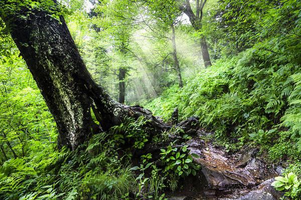 Photograph - Appalachian Trail by Debra and Dave Vanderlaan