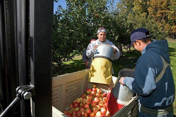 Malus Photograph - Apple Harvest by Jim West