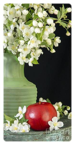 Apple Blossom Photograph - Apples by Edward Fielding