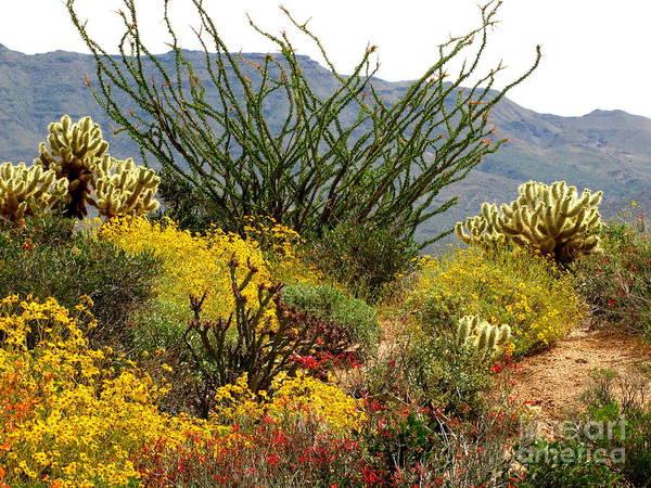 Ocotillo Wall Art - Photograph - Arizona Springtime by Marilyn Smith