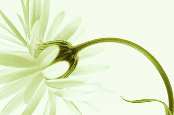 Curving Photograph - Artless by Priska Wettstein
