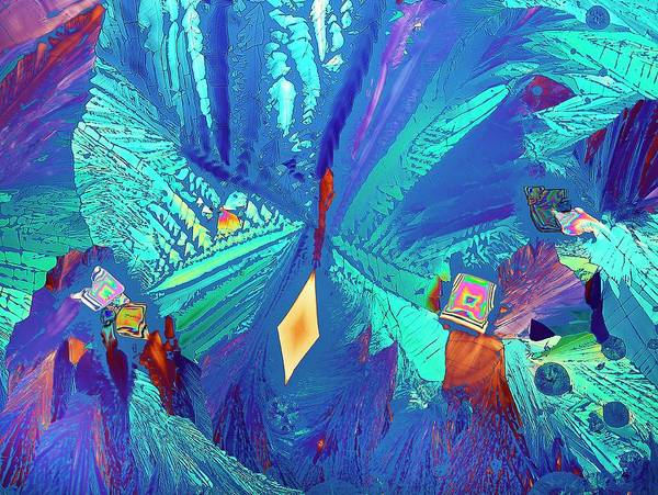 Wall Art - Photograph - Asparagine Crystals by Steve Lowry