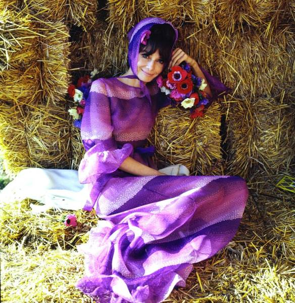 Agriculture Photograph - Audrey Hepburn Wearing A Purple Givenchy Dress by Henry Clarke
