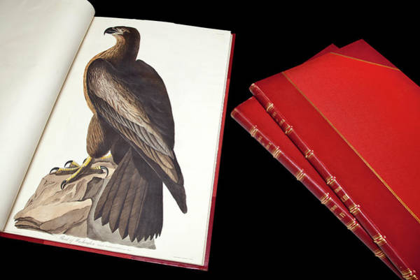 Accipitridae Wall Art - Photograph - Audubon's The Birds Of America by Natural History Museum, London