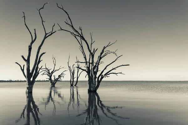 Petrified Photograph - Australia, Murray River Valley by Walter Bibikow