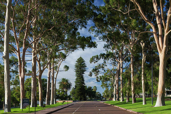 Park Avenue Photograph - Australia, Perth, Kings Park, Trees by Walter Bibikow