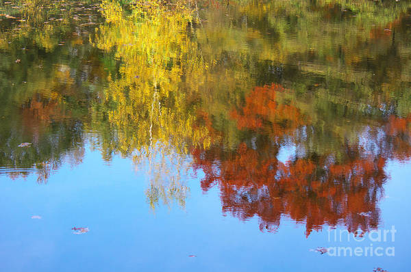 Photograph - Autumn Impression by Angela Doelling AD DESIGN Photo and PhotoArt