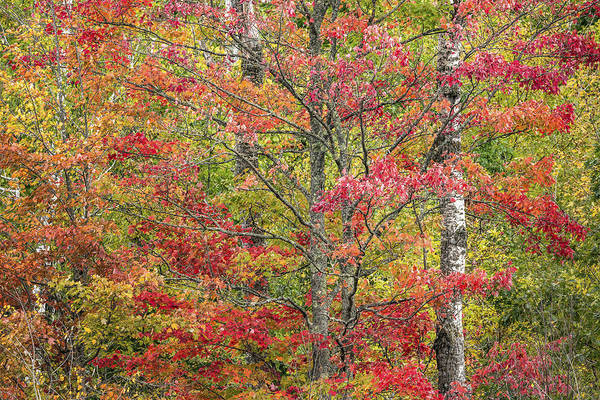 Wall Art - Photograph - Autumn In Northern Wisconsin by Linda Arndt
