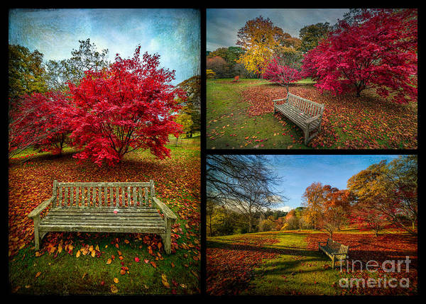 Scarlet Digital Art - Autumn In The Park by Adrian Evans