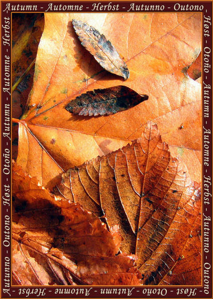 Photograph - Autumn Leaves 1 by Helene U Taylor