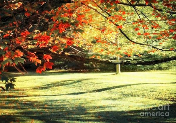 Photograph - Autumn Light 2 by Ellen Cotton