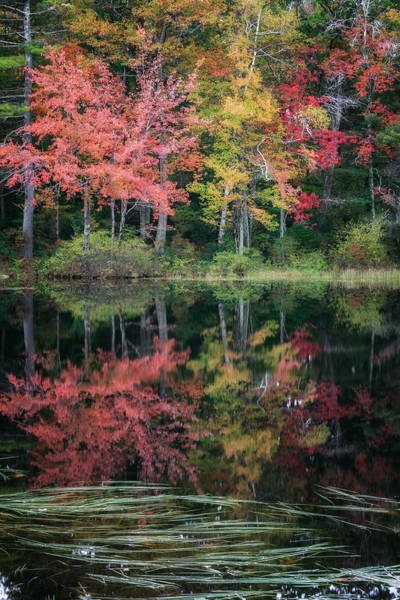 Autumn In New England Photograph - Autumn Pond by Bill Wakeley