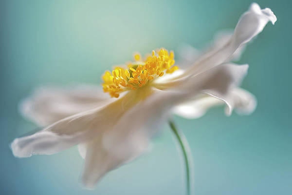 Macro Photograph - Autumn Reverie by Jacky Parker