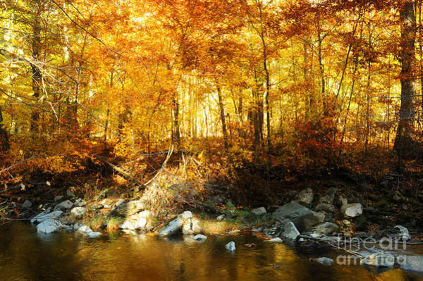 Wall Art - Photograph - Autumn Stream by HD Connelly