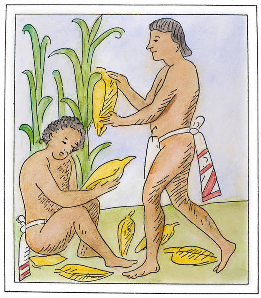 Indian Corn Drawing - Aztec Farmers by Granger