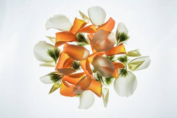 Light Box Photograph - Back Lit Flower Petals by Photostock-israel/science Photo Library