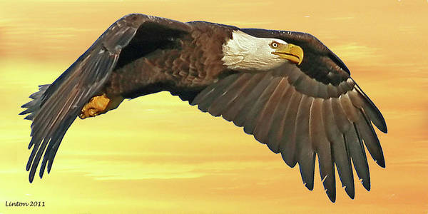 Photograph - Bald Eagle At Sunset by Larry Linton