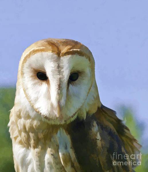 Photograph - Barn Owl by Les Palenik