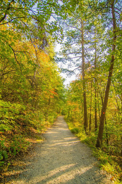 Photograph - Beautiful Autumn Forest Mountain Stair Path At Sunset by Alex Grichenko