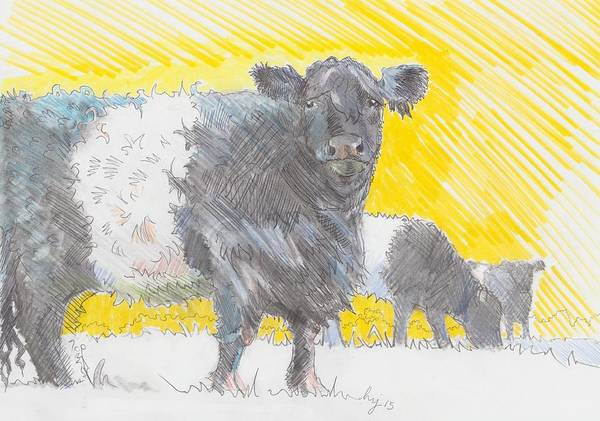 Drawing - Belted Galloway Cows by Mike Jory