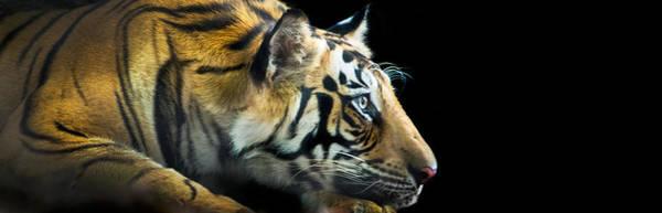 Wall Art - Photograph - Bengal Tiger Panthera Tigris Tigris by Panoramic Images