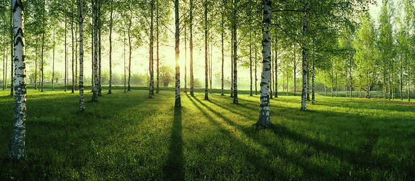 Birch River Photograph - Birch Trees By The Vuoksi River by Panoramic Images