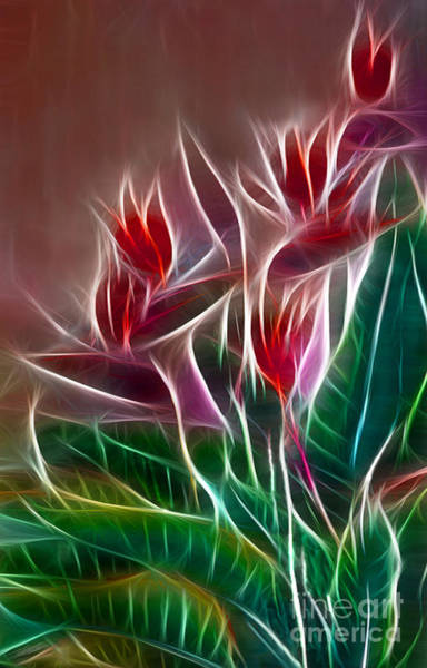 Wall Art - Digital Art - Bird Of Paradise Fractal by Peter Piatt