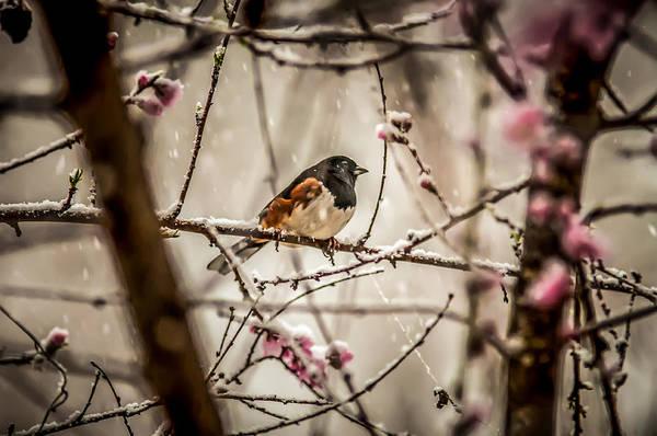 Photograph - Bird On A Tree In Snow by Alex Grichenko