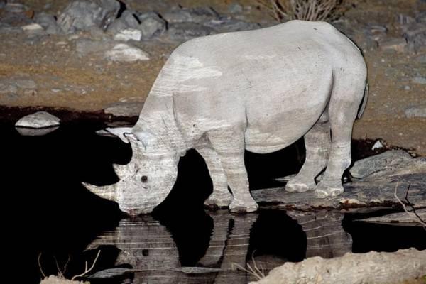 Hoof Photograph - Black Rhinoceros by Tony Camacho