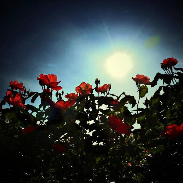 Photograph - Blooming by Natasha Marco
