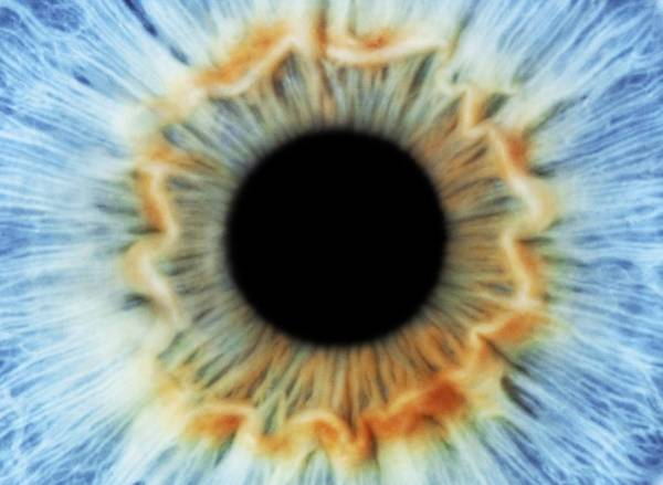Photograph - Blue Eye by Science Photo Library
