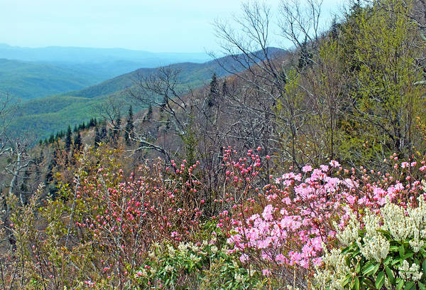 Photograph - Blueridge Parkway View At Mm 420 by Duane McCullough