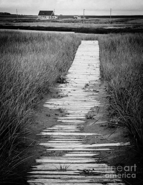 Photograph - Boardwalk Through The Dunes by Edward Fielding