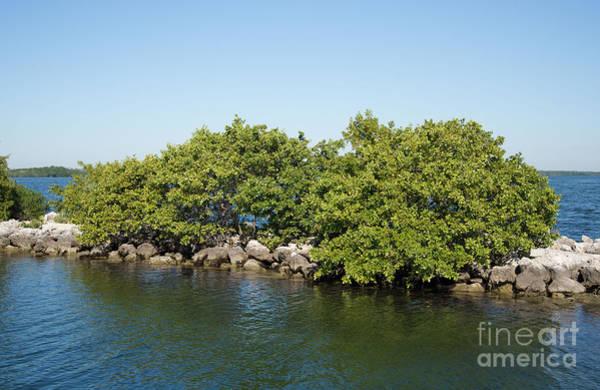 Mangroves Digital Art - Boca Chita Key by Carol Ailles