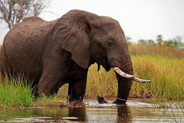Big 5 Photograph - Botswana, Okavango Delta by Kymri Wilt