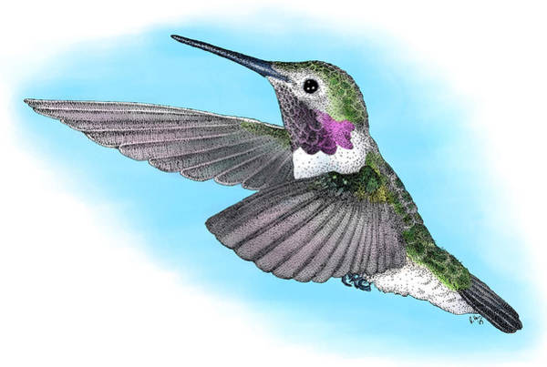 Broad-tailed Hummingbird Photograph - Broad-tailed Hummingbird by Roger Hall