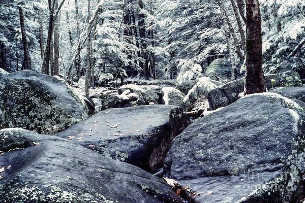 Photograph - Brokenback Run Shenandoah National Park by Thomas R Fletcher