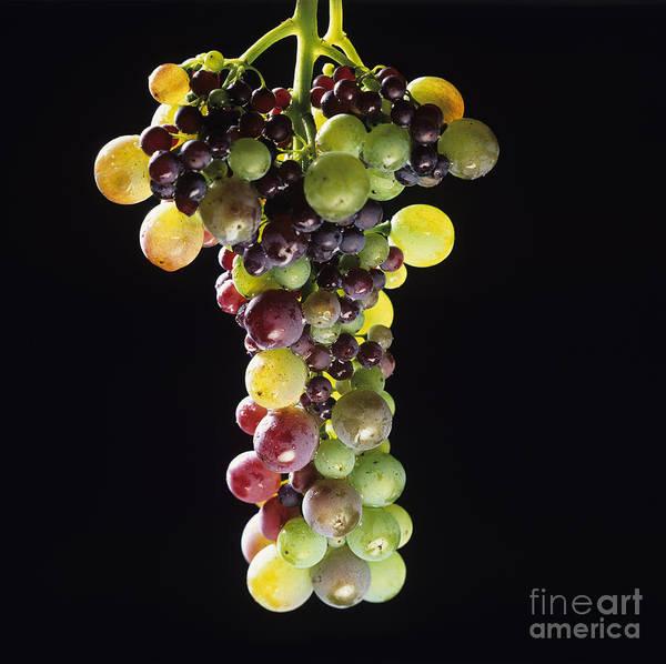 Grape Bunch Wall Art - Photograph - Bunch Of Grapes by Bernard Jaubert
