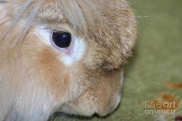 Photograph - Bunny by Debbie Stahre