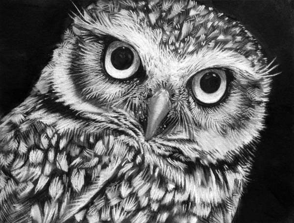 Wall Art - Drawing - Burrowing Owl  by Sharlena Wood